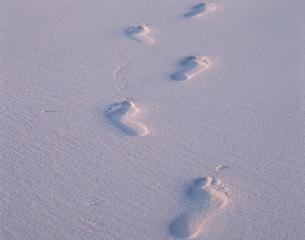 砂浜の上の足跡の写真素材 [FYI04061451]