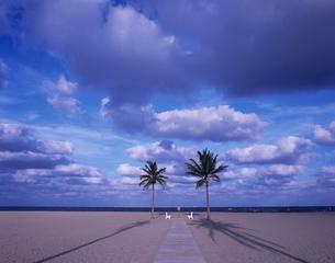 砂浜の2本のヤシの木の写真素材 [FYI04061533]