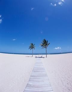 砂浜の2本のヤシの木の写真素材 [FYI04061538]