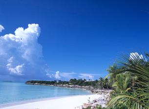 ビーチのヤシの木と入道雲の写真素材 [FYI04061649]