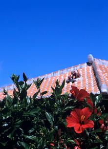 ハイビスカスと赤瓦屋根 竹富島の写真素材 [FYI04061691]