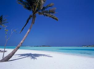 砂浜のヤシの木と陰 モルディブの写真素材 [FYI04061718]
