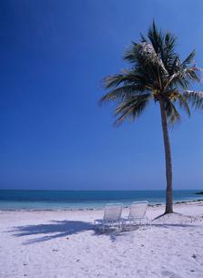 砂浜のデッキチェアとヤシの木の写真素材 [FYI04061786]