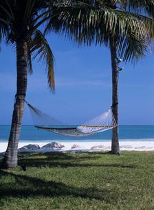 海辺の芝生とハンモックの写真素材 [FYI04061787]