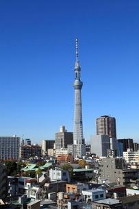 亀戸方面から見た東京スカイツリーの写真素材 [FYI04061871]