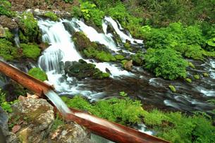 5月 新緑の羊蹄山のふきだし湧水の写真素材 [FYI04062076]