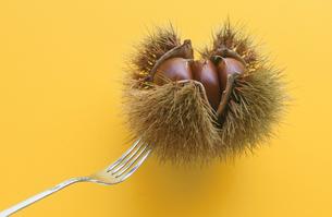 毬栗を刺すフォークの写真素材 [FYI04063959]