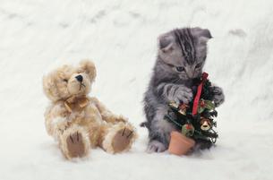 ネコとクリスマスの写真素材 [FYI04064092]