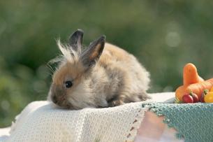 ウサギ(ライオン)とカラフルな野菜の写真素材 [FYI04064233]