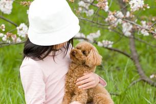 トイプードルを抱っこする女の子の写真素材 [FYI04064292]