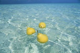 海に浮く洋梨の写真素材 [FYI04064441]