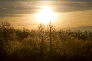 霧氷の写真素材 [FYI04065151]