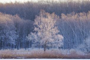 霧氷の写真素材 [FYI04065180]