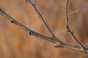 霧氷の写真素材 [FYI04065182]