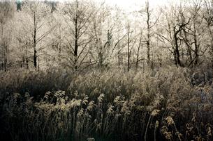 霧氷の写真素材 [FYI04065191]