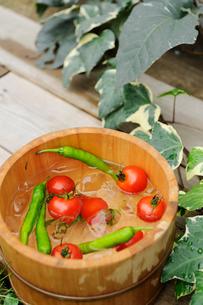 桶の中のミニトマトと青唐辛子の写真素材 [FYI04066114]