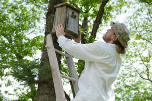 木に巣箱を取り付ける男性の写真素材 [FYI04066204]