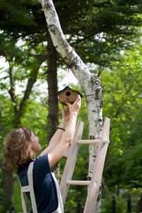 木に巣箱を取り付ける女性の写真素材 [FYI04066210]