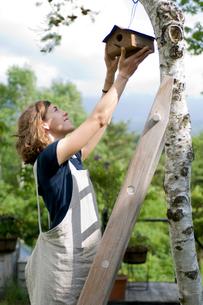 木に巣箱を取り付ける女性の写真素材 [FYI04066213]