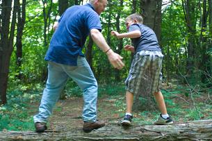 木の上で遊ぶ大人と子供の写真素材 [FYI04066216]