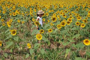 女の子とヒマワリ畑の写真素材 [FYI04066287]