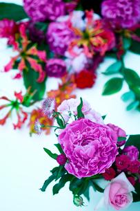 花(シャクヤク バラ アストランティア グロリオサ)の写真素材 [FYI04066739]