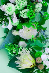 花(バラ カラー アジサイ ダリア カーネーション 他)の写真素材 [FYI04066743]