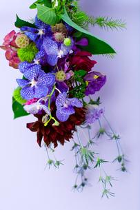 花(ダリア シャクヤク バンダ てまり草 エリンジューム)の写真素材 [FYI04066748]