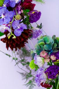 花(ダリア シャクヤク バンダ てまり草 秋色アジサイ 他)の写真素材 [FYI04066751]