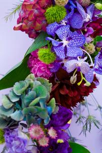 花(ダリア シャクヤク バンダ てまり草 秋色アジサイ 他)の写真素材 [FYI04066753]