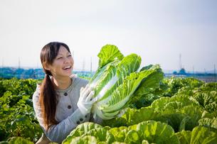 収穫したハクサイを持って笑う20代の女性の写真素材 [FYI04066899]