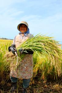 稲を持った農家の中高年女性の写真素材 [FYI04066903]