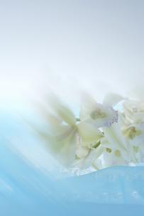 デンファレの花の写真素材 [FYI04067189]