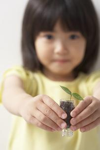 新芽を差し出す女の子の写真素材 [FYI04067256]