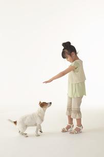 犬と遊んでいる女の子の写真素材 [FYI04067582]