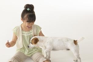 犬と遊ぶ女の子の写真素材 [FYI04067583]