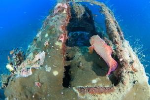 海底に沈むゼロ戦を住処にするトロピカルフィッシュ,海中の写真素材 [FYI04068176]