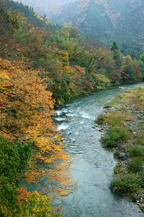 紅葉の板取川の写真素材 [FYI04068381]