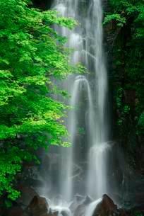 駒ヶ滝 の写真素材 [FYI04068434]