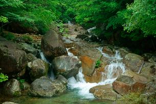 片知渓谷(かたぢけいこく) 岳水橋から上流の滝を望む の写真素材 [FYI04068435]