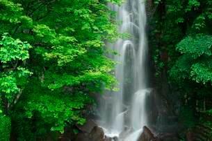 駒ヶ滝 の写真素材 [FYI04068438]