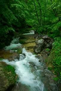 叺谷・長良川の源流の写真素材 [FYI04068442]