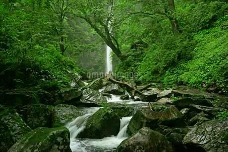 阿弥陀ヶ滝 の写真素材 [FYI04068444]