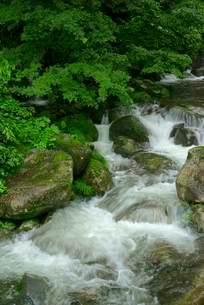 渓流 阿弥陀ヶ滝下流の前谷川  の写真素材 [FYI04068445]
