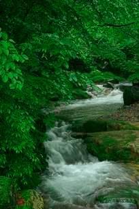 叺谷・長良川の源流 の写真素材 [FYI04068447]
