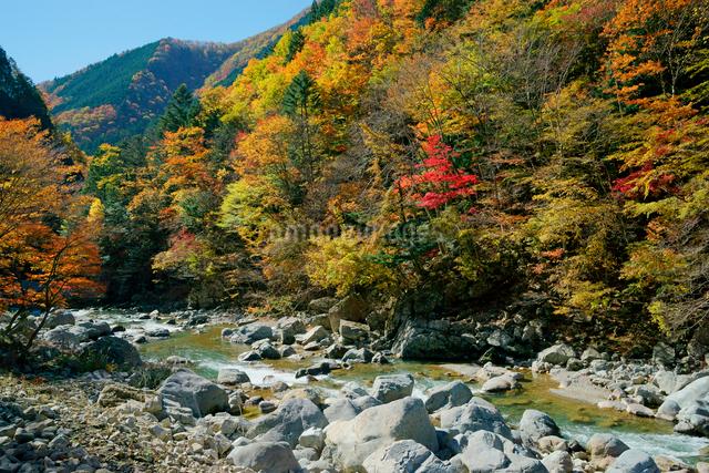 紅葉・馬瀬川,の写真素材 [FYI04068482]