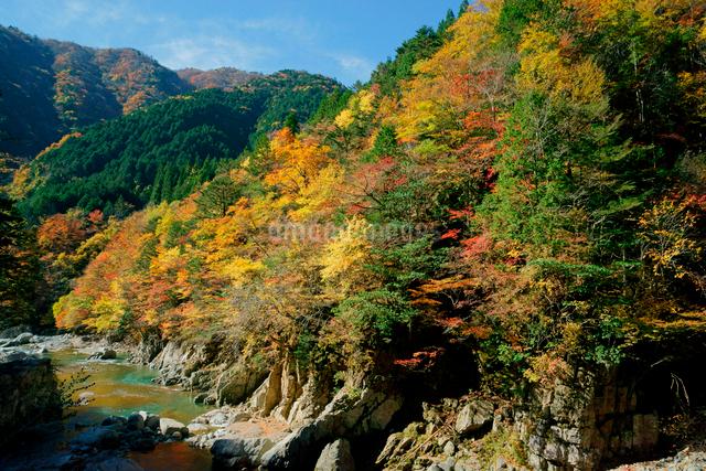 紅葉・馬瀬川,の写真素材 [FYI04068523]
