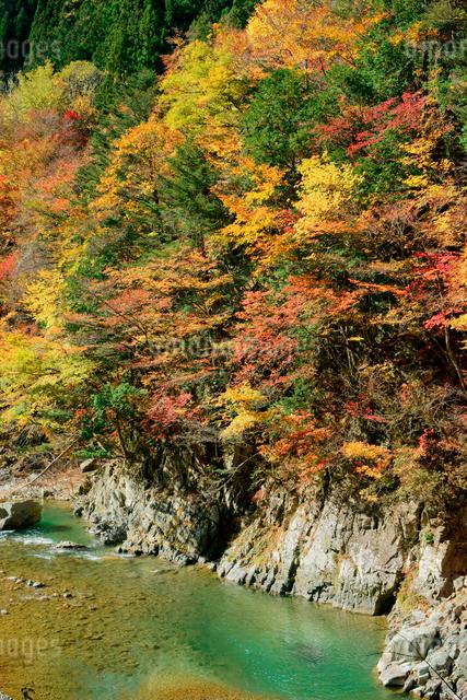 紅葉・馬瀬川,の写真素材 [FYI04068528]