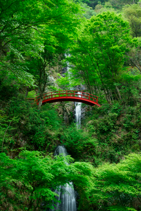 五宝滝の写真素材 [FYI04068533]
