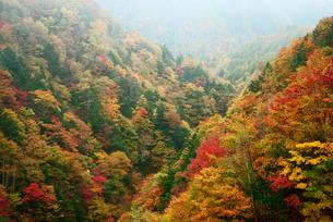飛騨川の紅葉 戸沢谷橋より下流を望むの写真素材 [FYI04068587]
